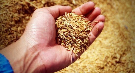 Sprijin pentru acţiunile de informare privind politica agrară comună